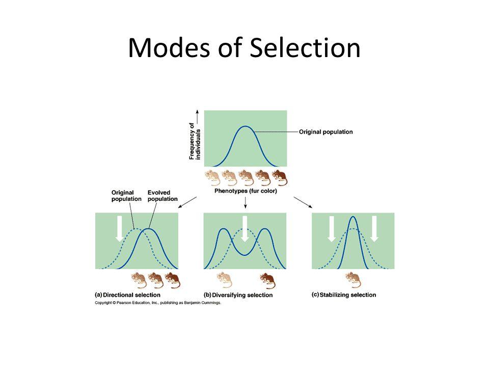Natural Selection  Principles