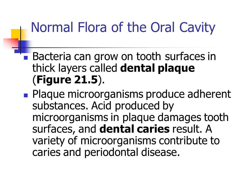 normal flora microbiology