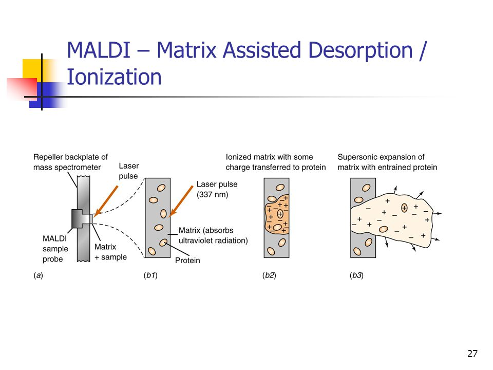 MALDI – Matrix Assisted Desorption / Ionization