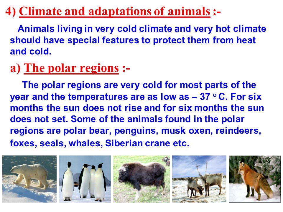 adaptive features of animals in polar region