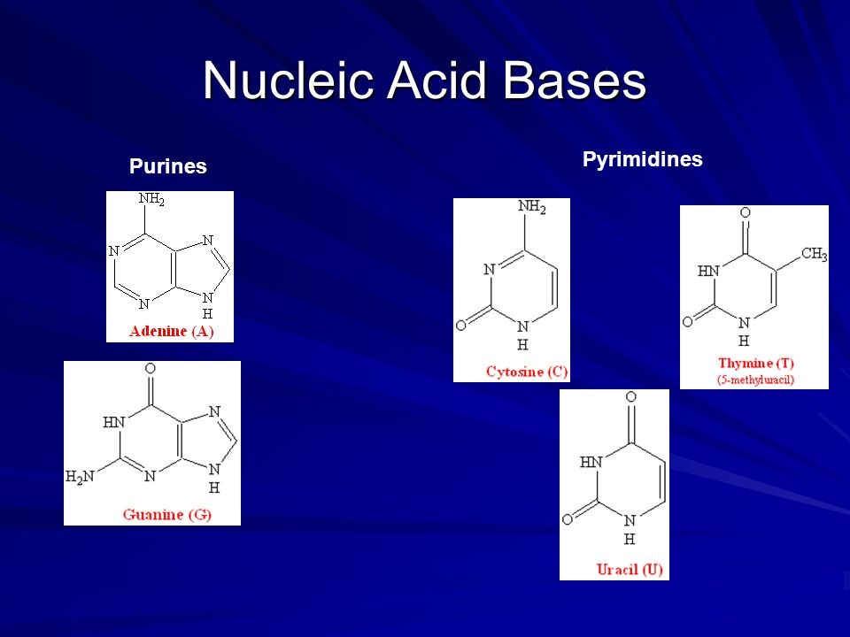 D Deoxyribose Nucleotides: Synthesis...