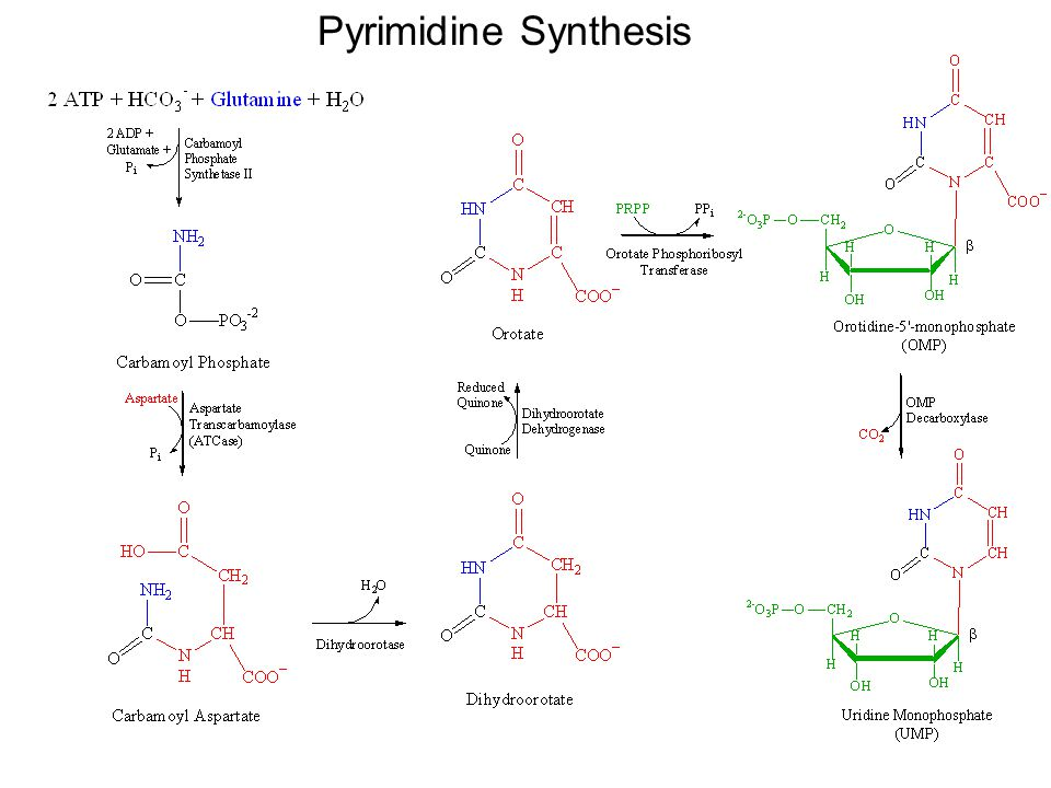 Nucleotides: Synthesis and Degradation