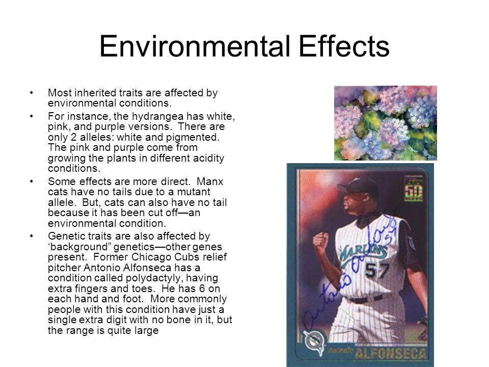 environmental traits - photo #7
