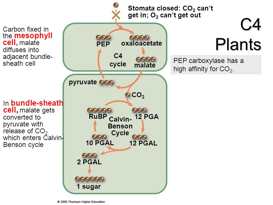 7. Photosynthesis. - ppt download