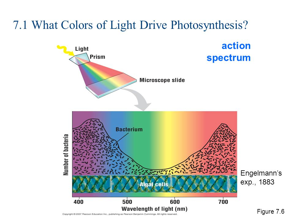 7 Photosynthesis Ppt Download