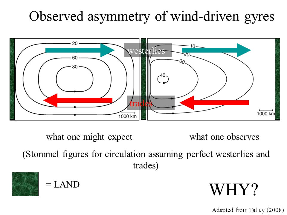 Observed asymmetry of wind-driven gyres