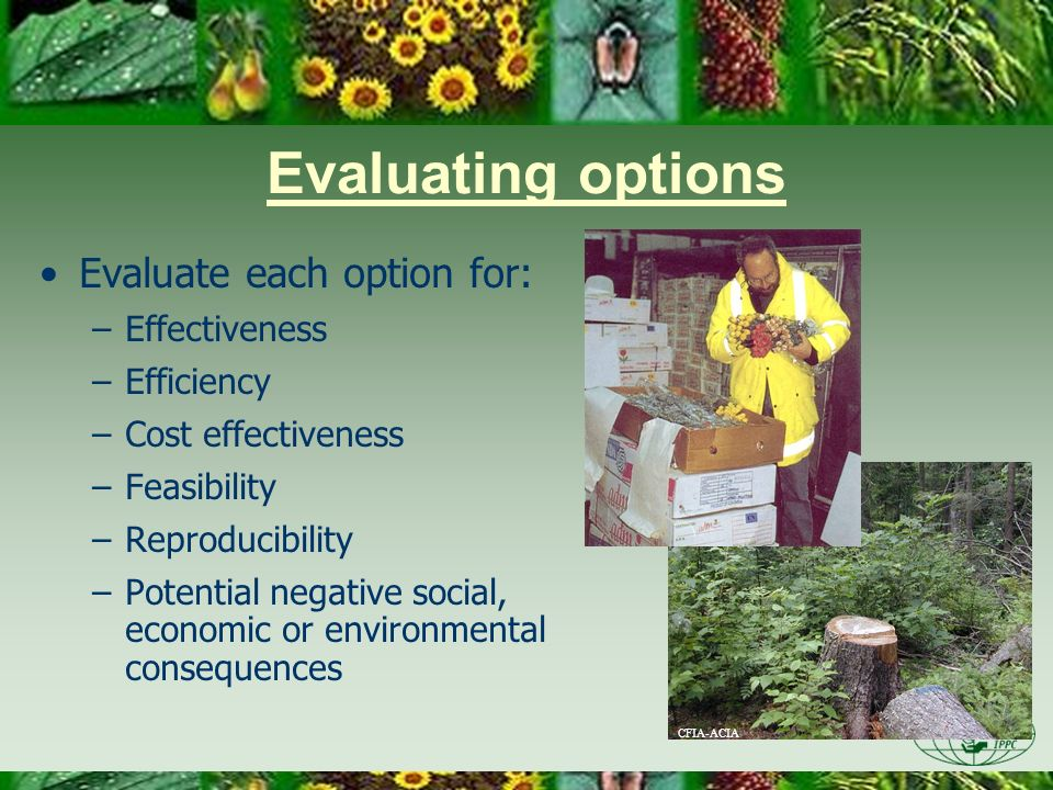Evaluating options Evaluate each option for: Effectiveness Efficiency