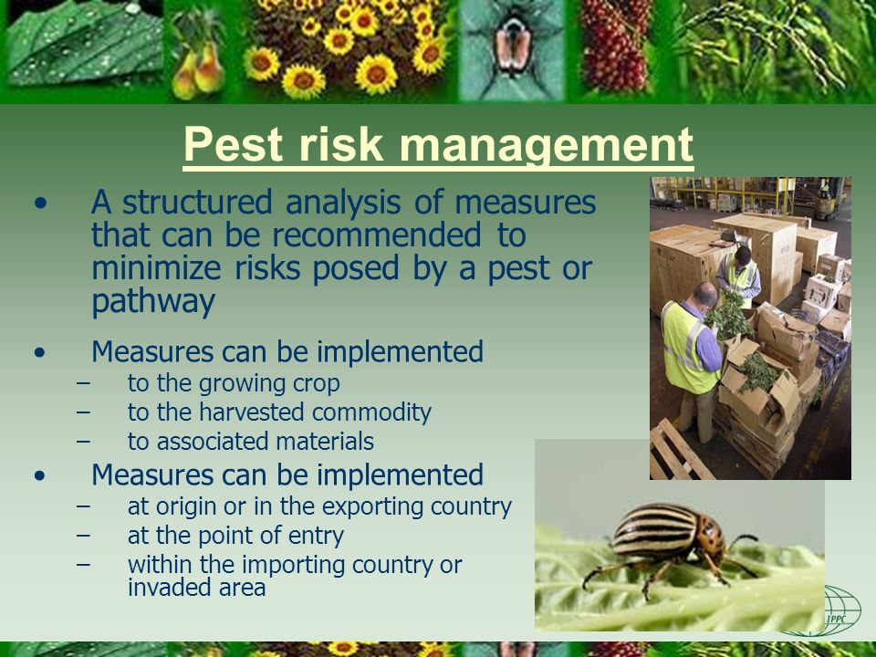 Day Four 3/22/2017. Pest risk management. A structured analysis of measures that can be recommended to minimize risks posed by a pest or pathway.