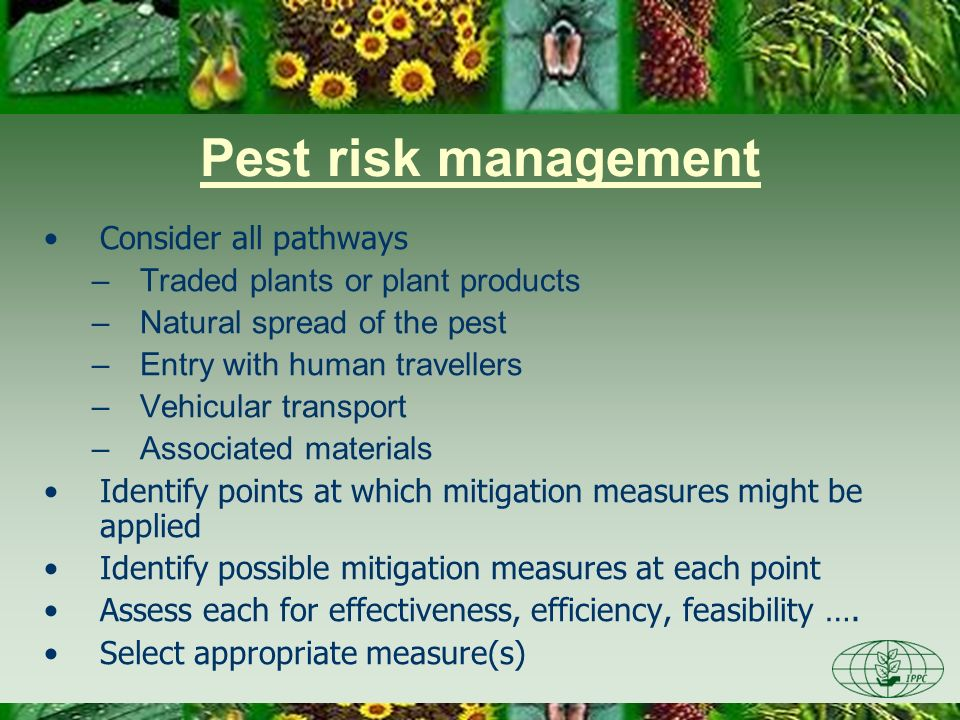 Pest risk management Consider all pathways