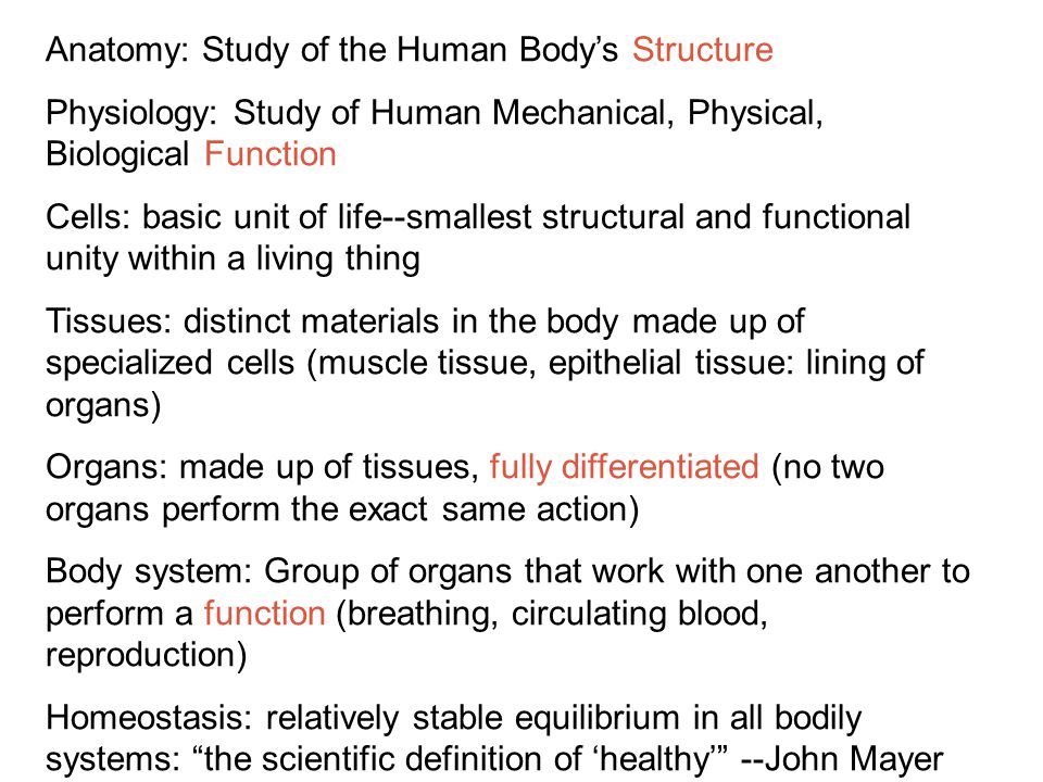 Human Anatomy And Physiology Ppt Video Online Download