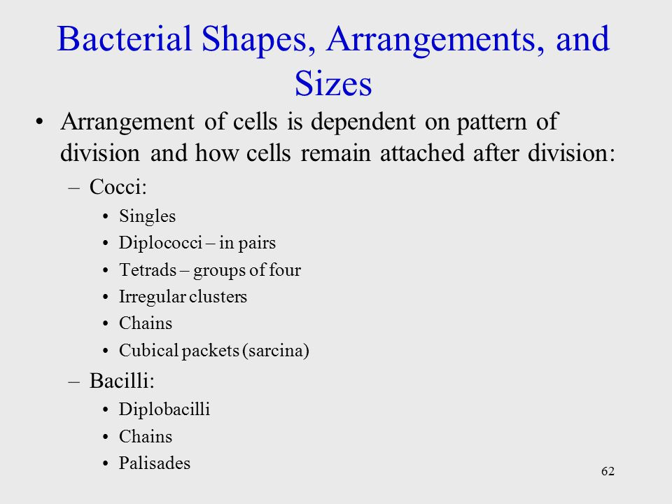 bacteria shape and size essay The cell wall of gram positive bacterium had a thick peptidoglycan layer   colourless, translucent, raised, smooth, and had a larger size colony.