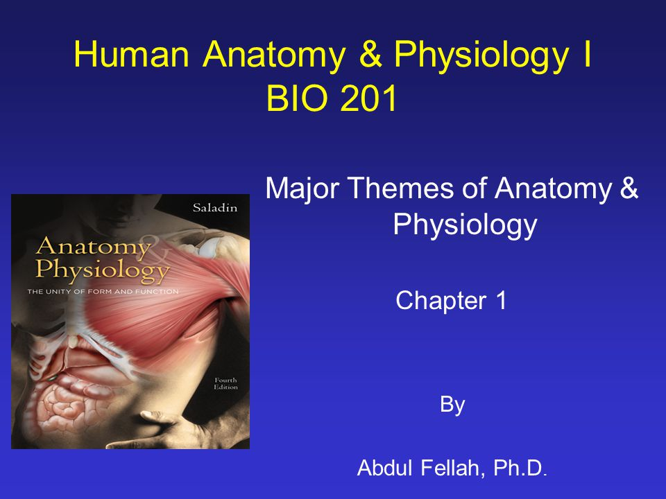 Human Anatomy & Physiology I BIO ppt video online download