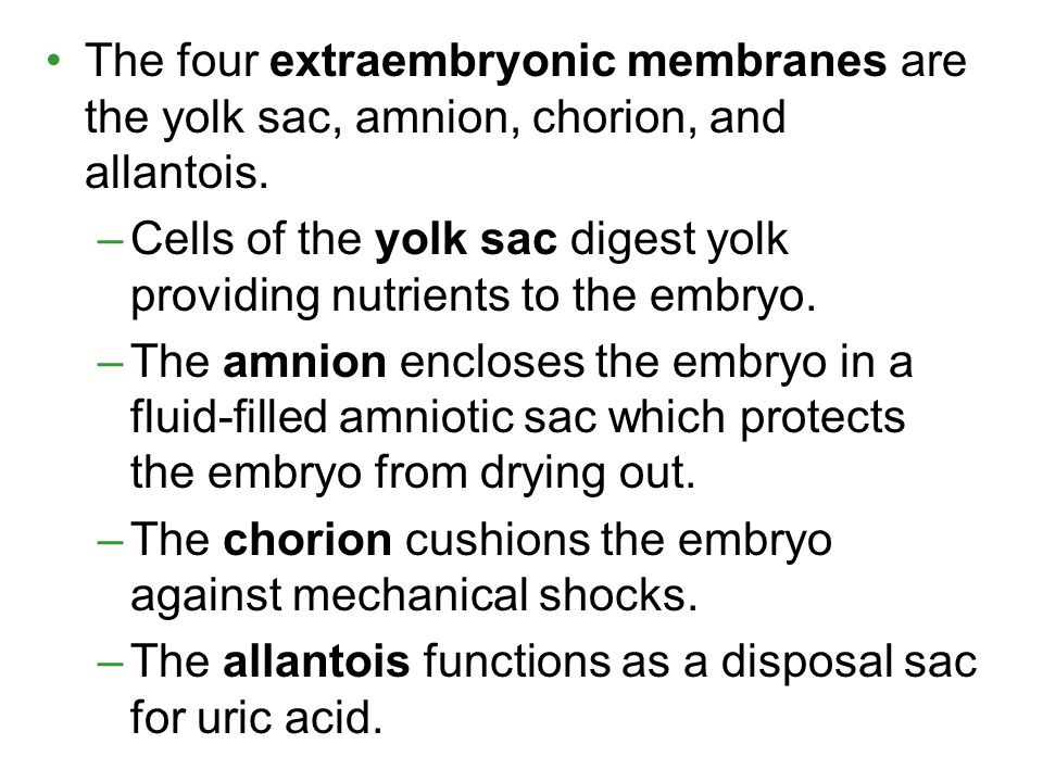 The four extraembryonic membranes are the yolk sac, amnion, chorion, and allantois.