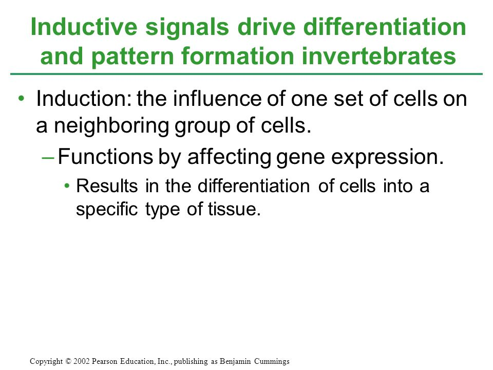Inductive signals drive differentiation and pattern formation invertebrates