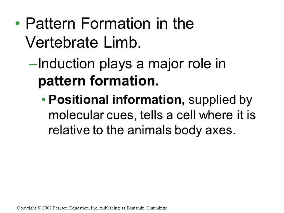 Pattern Formation in the Vertebrate Limb.