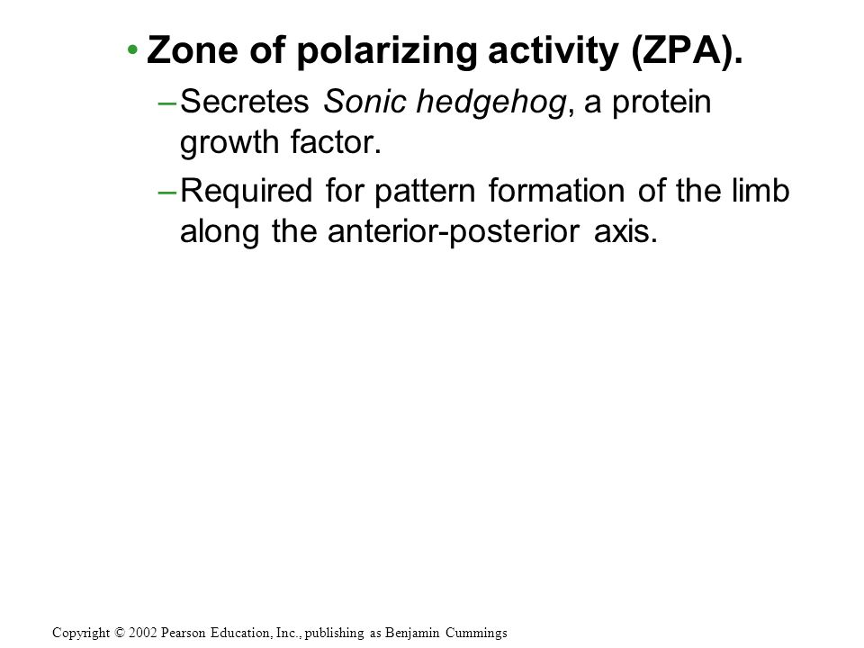Zone of polarizing activity (ZPA).