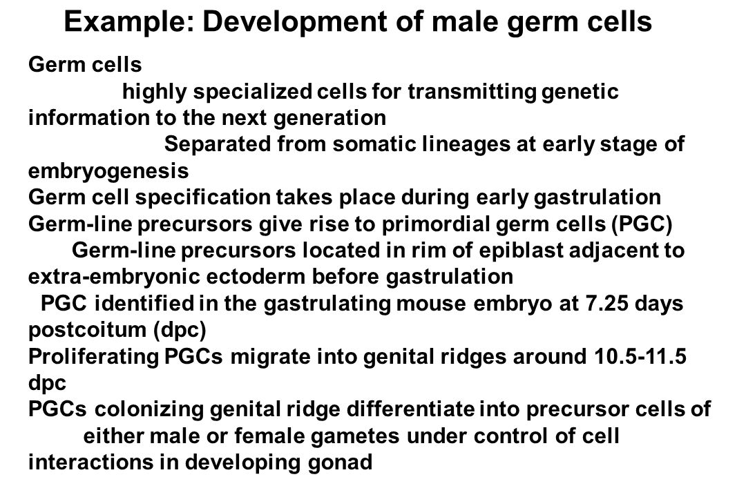developing female and male germ cells Human development begins after the union of male and female gametes or germ cells during a process known as fertilization (conception) fertilization is a sequence of events that begins with the contact of a sperm (spermatozoon) with a secondary oocyte (ovum) and ends with the fusion of their pronuclei (the haploid nuclei of the sperm and ovum) and the mingling of their chromosomes to form a.