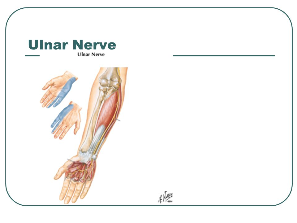 ulnar nerve - photo #23