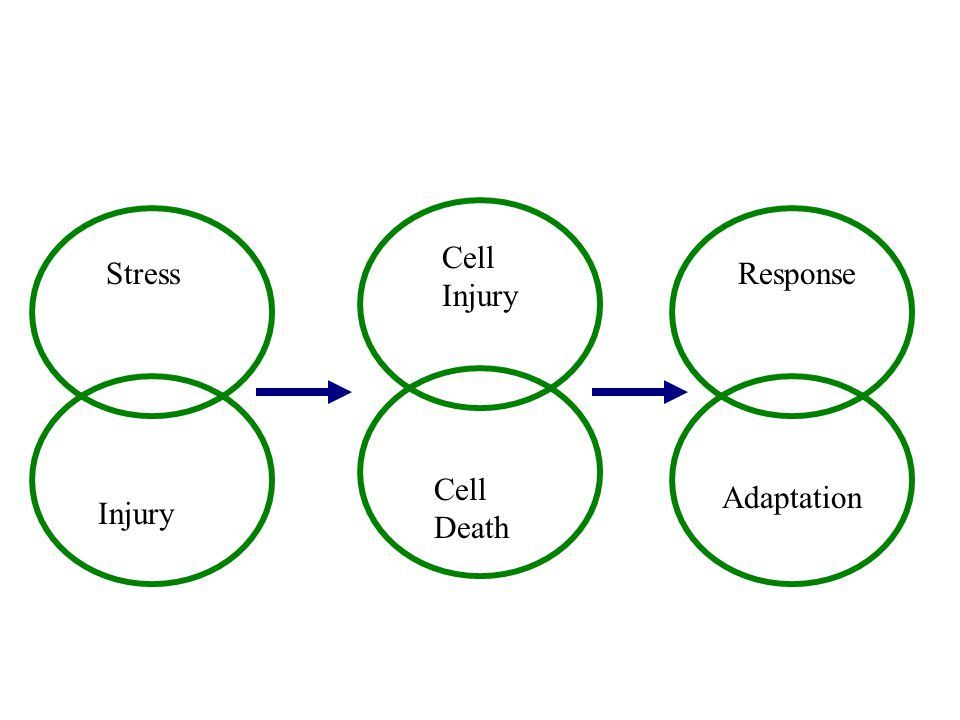 Cell Injury Stress Response Cell Death Adaptation Injury