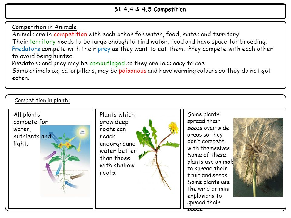 Y9 Revision Resources May ppt video online download