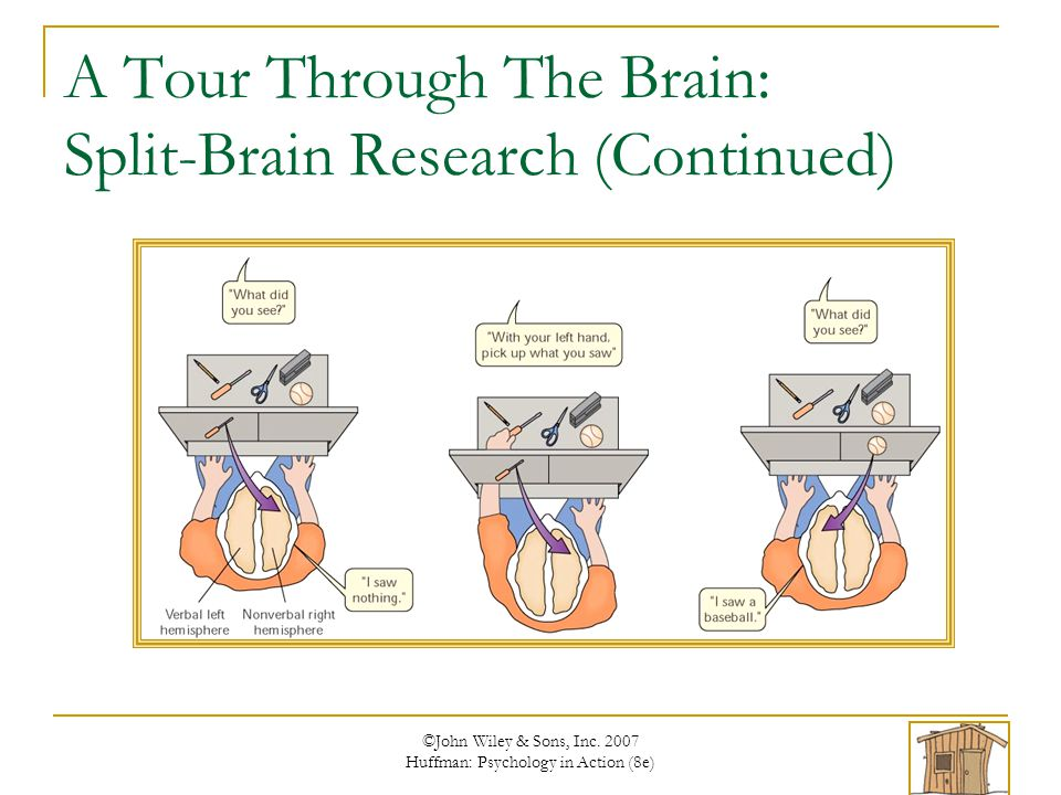 an introduction to split brain psychology Start studying ap psychology split brain learn vocabulary, terms, and more with flashcards, games, and other study tools.
