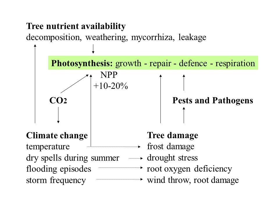 Tree nutrient availability