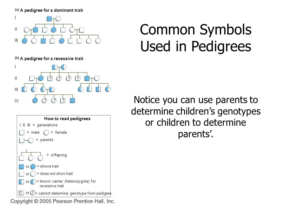 how to read pedigrees
