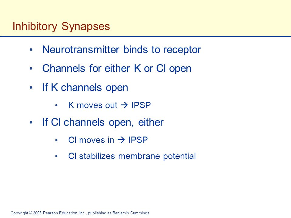 Inhibitory Synapses Neurotransmitter binds to receptor