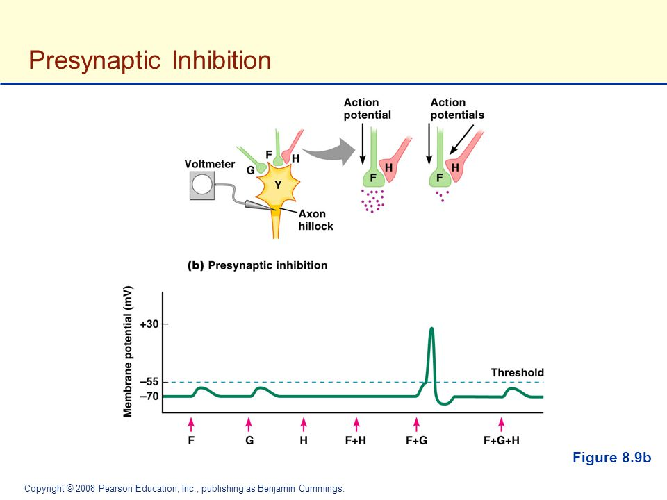 Presynaptic Inhibition