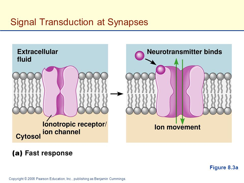 Signal Transduction at Synapses