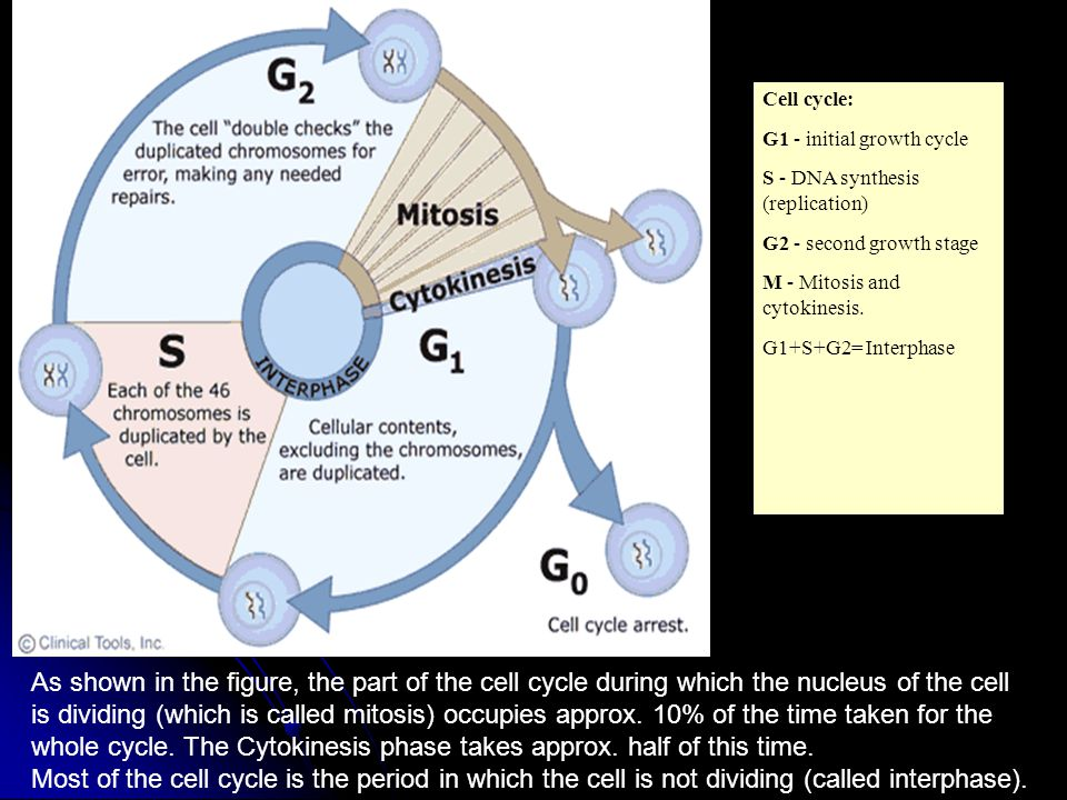 how the cell cycle operates This animation reviews the stages of the cell cycle that allow eukaryotic cells to grow and m how the cell cycle works you may already have access to this content.