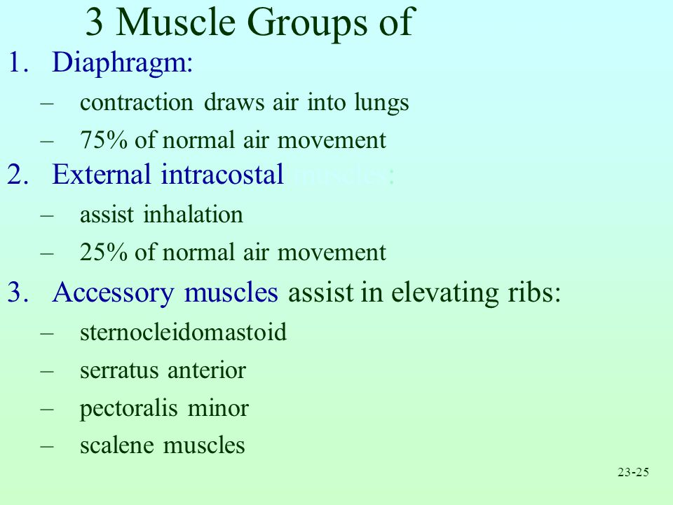 3 Muscle Groups of Inhalation