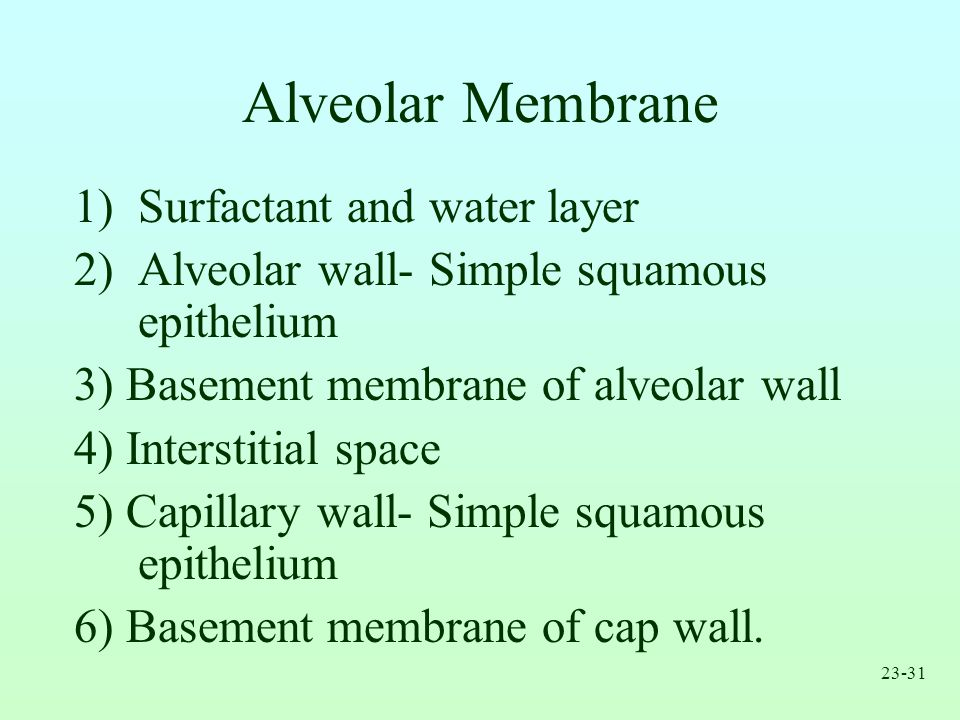 Alveolar Membrane Surfactant and water layer