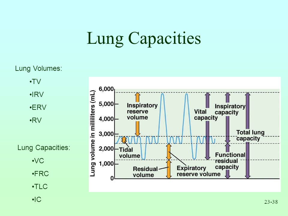 Lung Capacities Lung Volumes: TV IRV ERV RV Lung Capacities: VC FRC