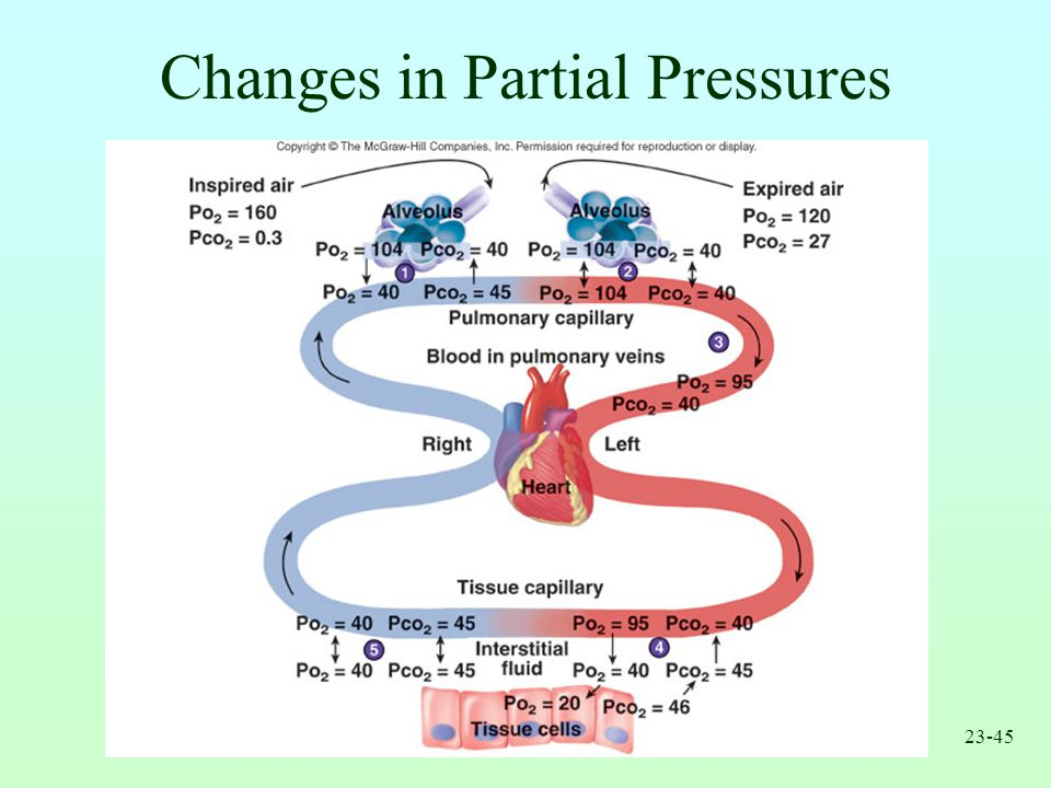 Changes in Partial Pressures