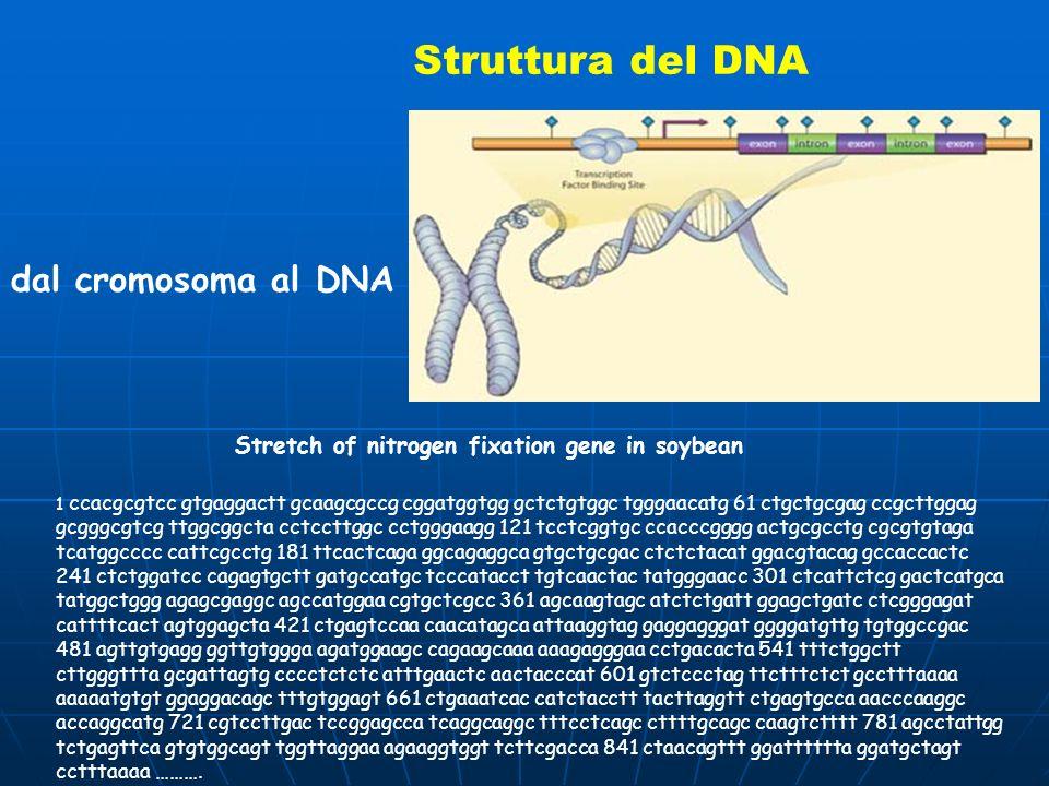 Struttura del DNA dal cromosoma al DNA