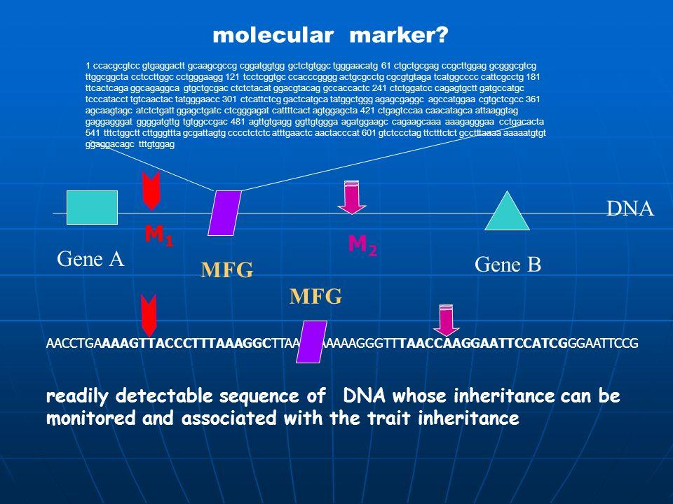molecular marker DNA M1 M2 Gene A Gene B MFG MFG