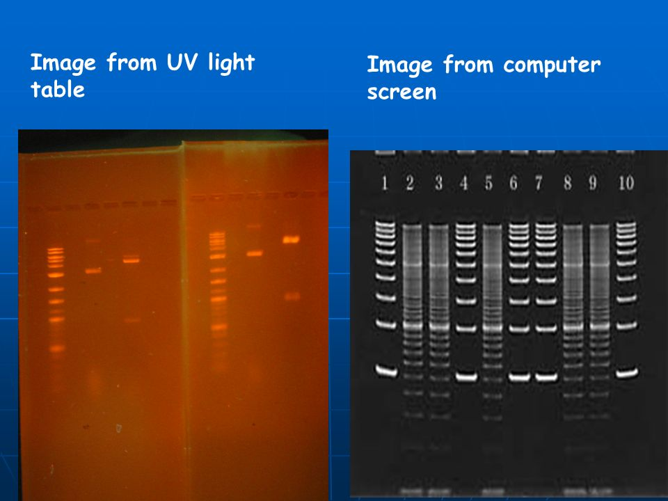 Image from UV light table