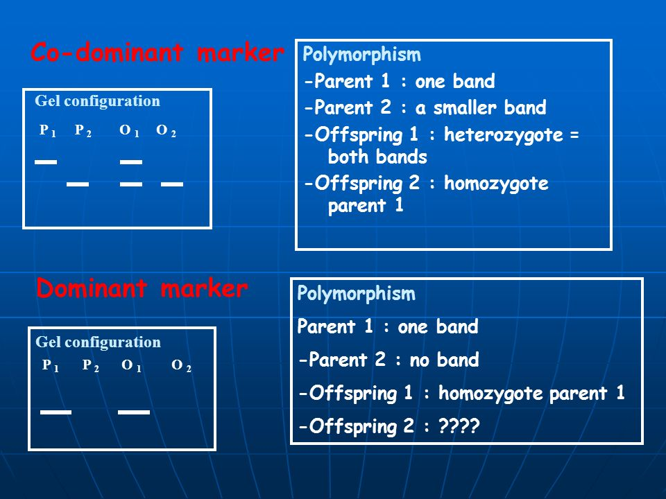 Co-dominant marker Dominant marker Polymorphism -Parent 1 : one band