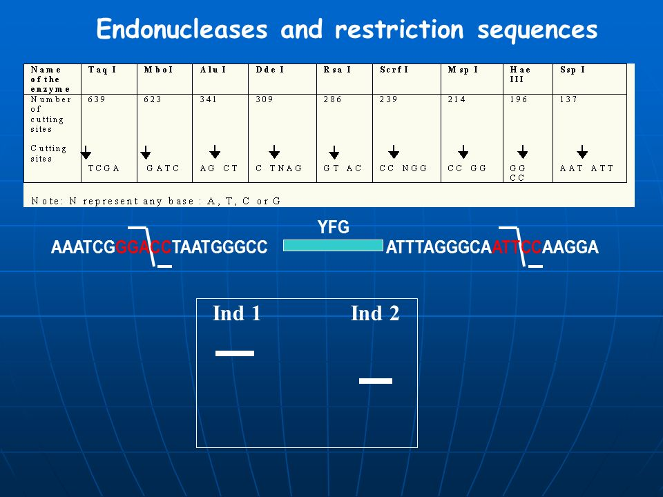 Endonucleases and restriction sequences
