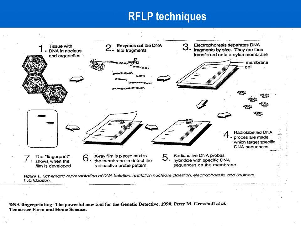 RFLP techniques