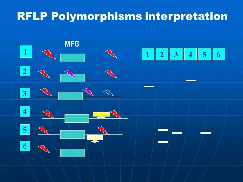 RFLP Polymorphisms interpretation