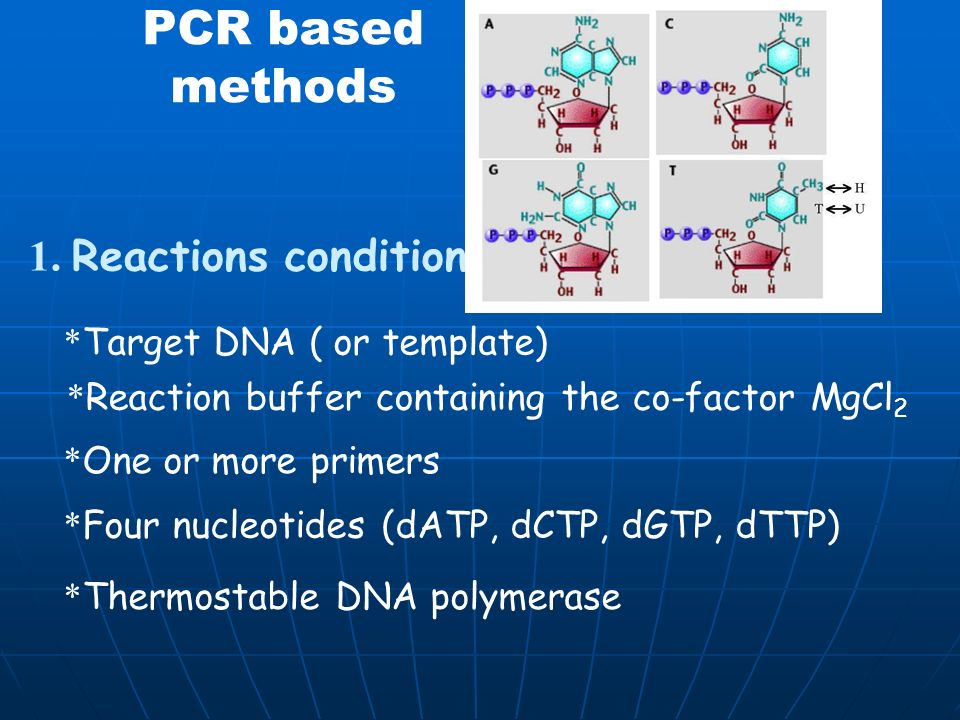 PCR based methods 1. Reactions conditions *Target DNA ( or template)