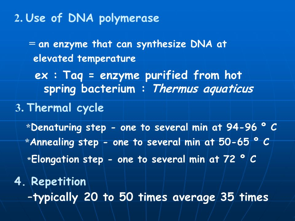 = an enzyme that can synthesize DNA at