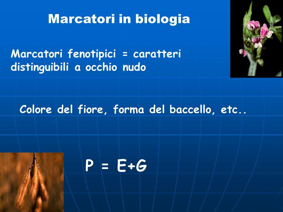 P = E+G Marcatori in biologia