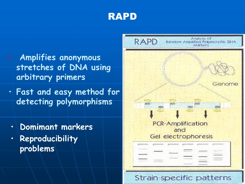 RAPD Fast and easy method for detecting polymorphisms Domimant markers