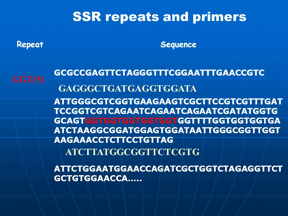 SSR repeats and primers