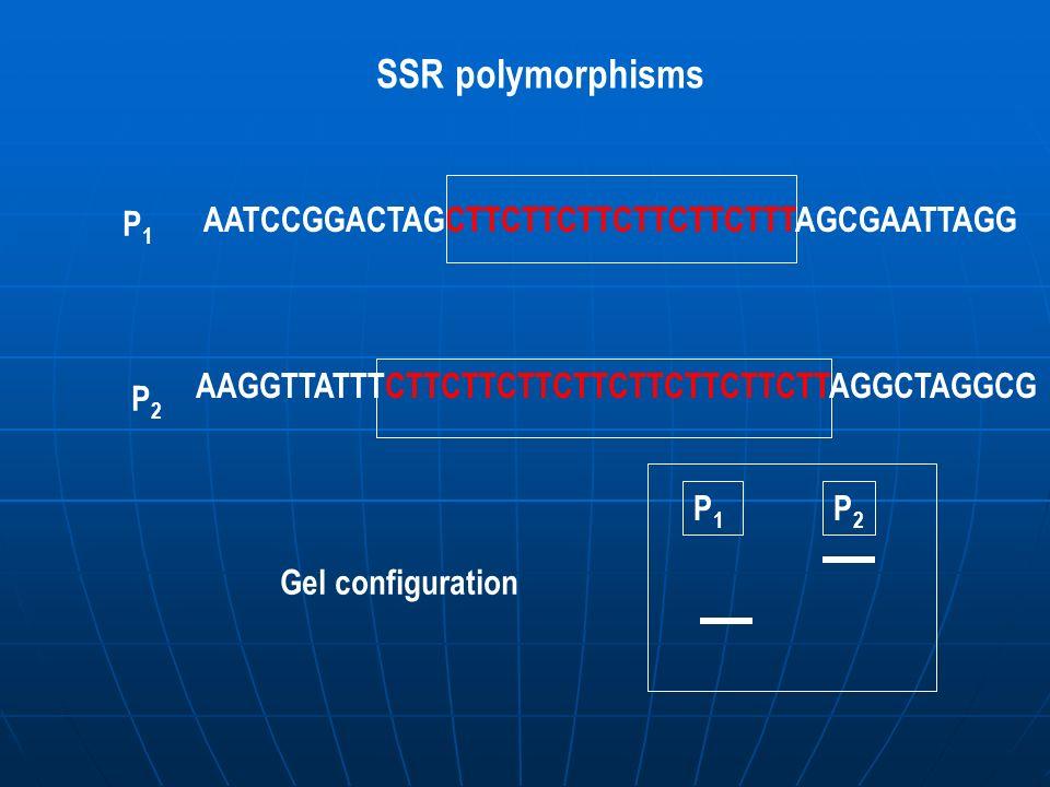 SSR polymorphisms AATCCGGACTAGCTTCTTCTTCTTCTTCTTTAGCGAATTAGG P1