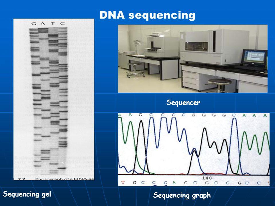 DNA sequencing Sequencing gel Sequencer Sequencing graph