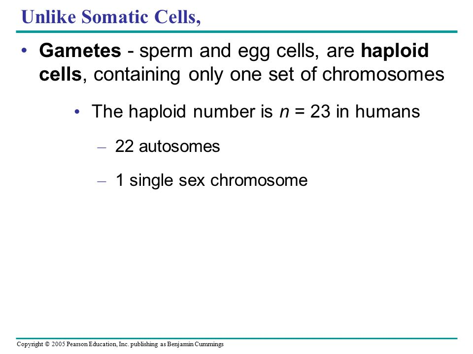 Unlike Somatic Cells, Gametes - sperm and egg cells, are haploid cells, containing only one set of chromosomes.